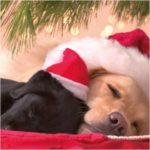 Cute Puppies - Small Christmas Card Pack