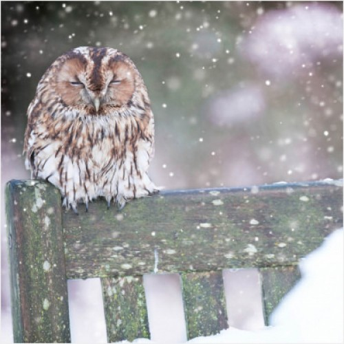 Cosy Owl - Small Christmas Card Pack