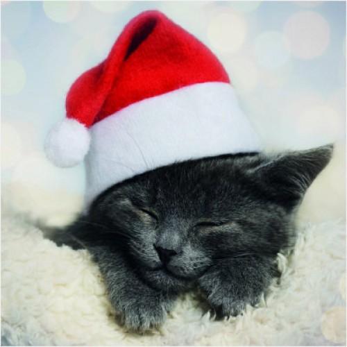 Cute Cat - Small Christmas Card Pack