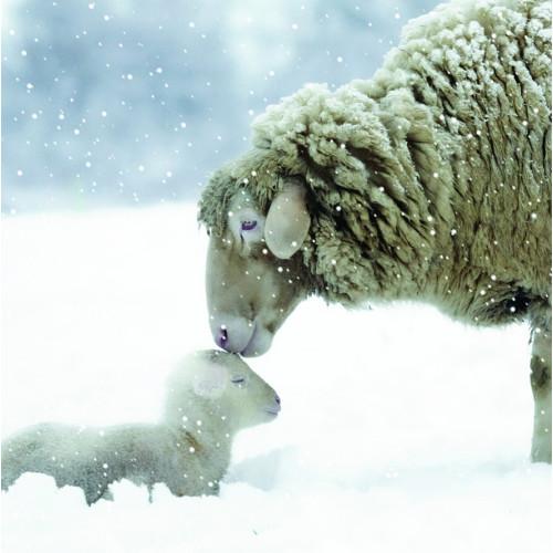 Cute Sheep - Large Christmas Card Pack