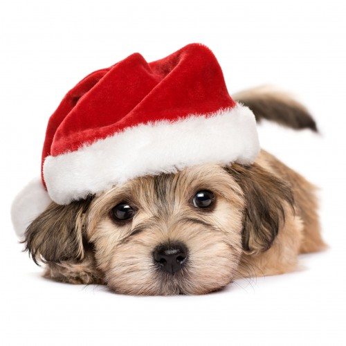 A Christmas card pack with a cute Dog wearing a Santa hat