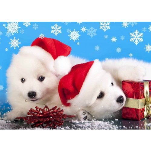 Cute Christmas Puppies.Christmas Puppies Christmas Card Pack
