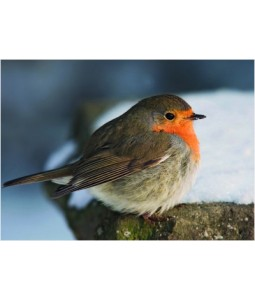 Robin on a Stone - Christmas Card Pack