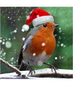 Merry Robin - Small Christmas Card Pack