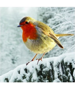 Robin on a Snowy Branch - Large Christmas Card Pack