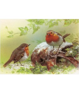 Painted Robins - Christmas Card Pack