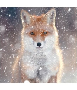 Fox - Small Christmas Card Pack