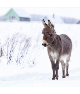 Donkey in Snow - Small Christmas Card Pack