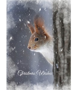 Squirrel - Christmas Card Pack