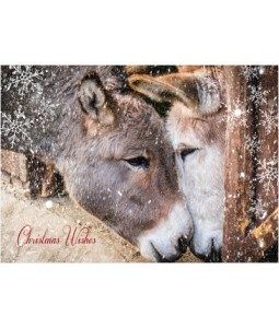 Donkeys in Barn - Christmas Card Pack