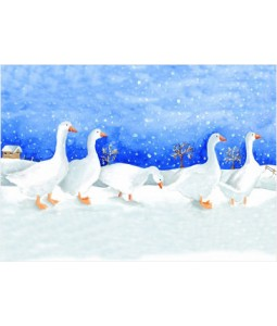 Gaggle of Geese - Christmas Card Pack
