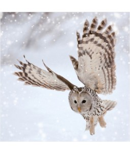 Owl in Flight - Small Christmas Card Pack