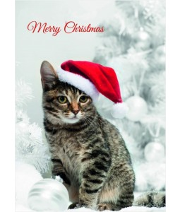 Christmas Cat - Christmas Card Pack