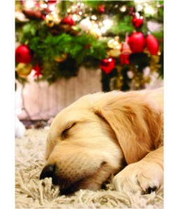 Cosy Puppy - Christmas Card Pack