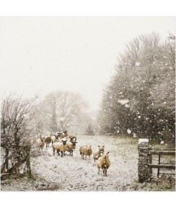 Winter Sheep - Small Christmas Card Pack