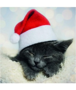 Cute Cat - Small Christmas Card Pack