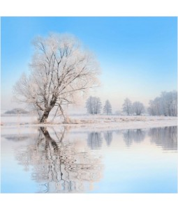 Frosted Tree - Large Christmas Card Pack