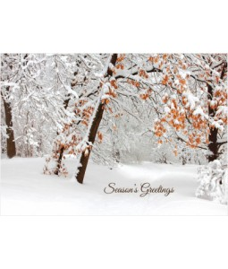 Snowy Branches - Christmas Card Pack