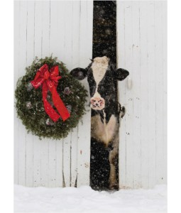 Born in a Barn Christmas Card Pack