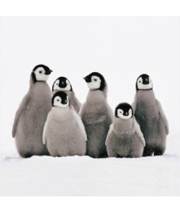 Penguin Huddle - Small Christmas Card Pack