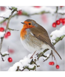 Robin and Berries - Small Christmas Card Pack