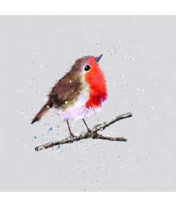 Fluffy Robin - Large Christmas Card Pack