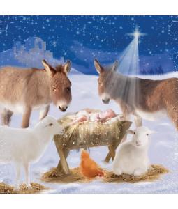 Greeting at Manger- Large Christmas Card Pack
