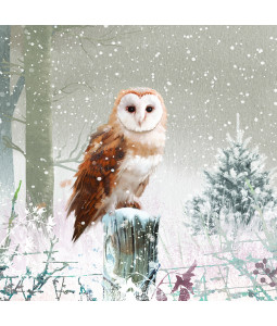 Winter Barn Owl - Large Christmas Card Pack