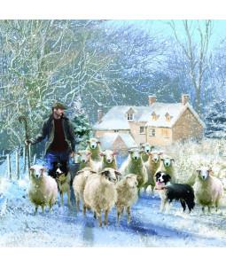 Wintertime Flock - Large Christmas Card Pack