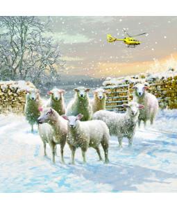 Sheep Emergency - Large Christmas Card Pack