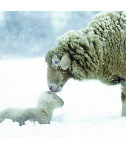 Cute Sheep - Small Christmas Card Pack