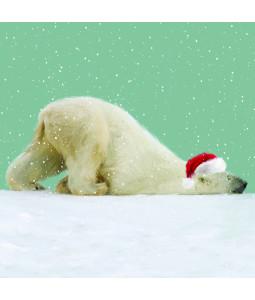 Snoozing Polar Bear - Large Christmas Card Pack (