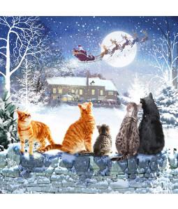 Christmas Glaring - Small Christmas Card Pack