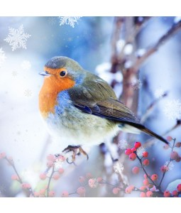 A Christmas card pack with a lovely image of a Robin on a branch