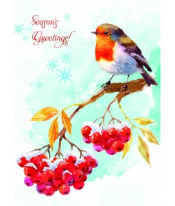 A Christmas card pack with a painted Robin with berries