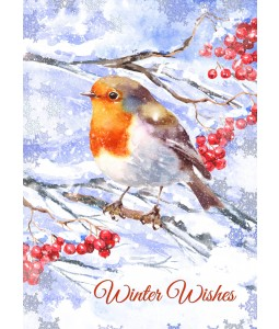 Frosty Robin - Christmas Card Pack