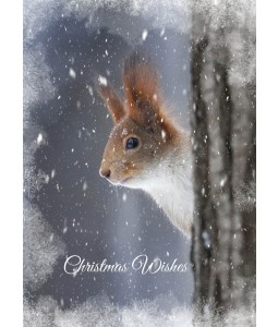 A Christmas card pack with a lovely Squirell peaking from behind a tree