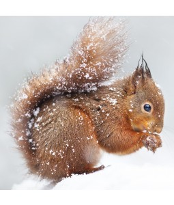 A Christmas card pack featuring a cute Squirell in the Snow