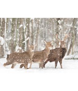 Deer in the Woods - Christmas Card Pack