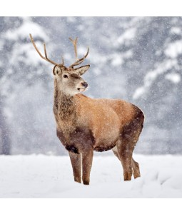 A Christmas card pack with a lovely Deer in the snow