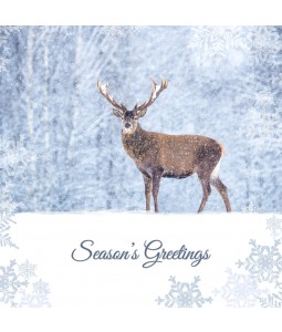 A Christmas card pack with a Deer in the snow