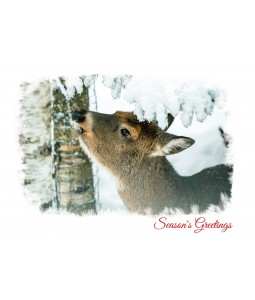 A Christmas card pack with a Deer under as snow covered tree.