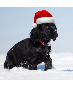 A Christmas card pack with a snowy Spaniel wearing a Santa hat