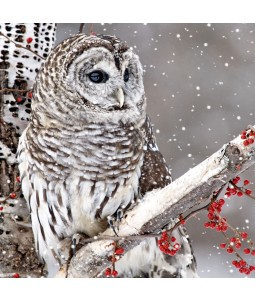 A Christmas card pack with an Owl perched on a branch