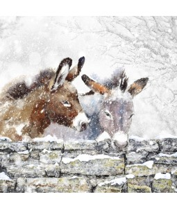 A Christmas card pack with two Donkeys nuzzling close one another