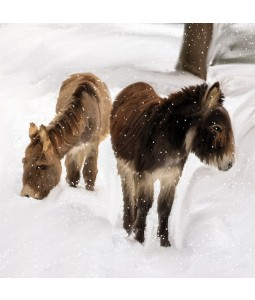 A Christmas card pack with two Donkeys in the snow