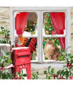Christmas Time Robin - Small Christmas Card Pack