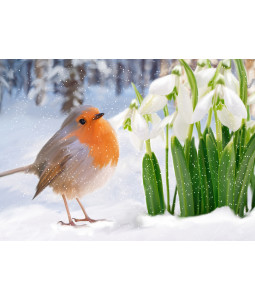 Snowdrop Robin - Christmas Card Pack