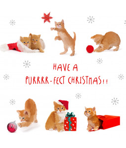 Purr-fect Christmas - Small Christmas Card Pack