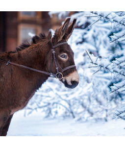 Winter Donkey - Large Christmas Card Pack